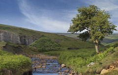 The Burn at Bollihope (jimsumo999) Tags: stanhope sigma green verdant canon landscape beck burn stream tree lonely moor moorland