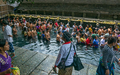 Worshipers taking a bath in the purifying pool at Tirta Empul temple, Bali island, Tampaksiring, Indonesia (Eric Lafforgue) Tags: adultsonly amritha asia attraction bali bali1837 balinese bathing day groupofpeople hindu hinduism holyspringwater horizontal indonesia indonesian offerings outdoors pond pool purification purifying religion religious religiousbuilding religiouspractice ritual ritualbath sacred tampaksiring tirta tirtaempul tourism warmadewadynasty water watertemple women worship worshipers baliisland