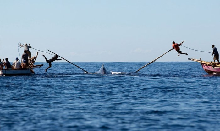 whale-hunting-two