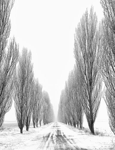 フリー画像| 人工風景| 道の風景| 並木道| 雪景色| イタリア風景| モノクロ写真|     フリー素材|