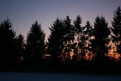 Looking for a christmas tree (Jrgenshaus) Tags: schnee winter sunset sun moon snow germany weihnachten geotagged deutschland mond europa europe sonnenuntergang nightshot christmastree firstsnow dezember weihnachtsbaum merrychristmas rheinland contrejour nachtaufnahme gegenlicht alfter winter2009