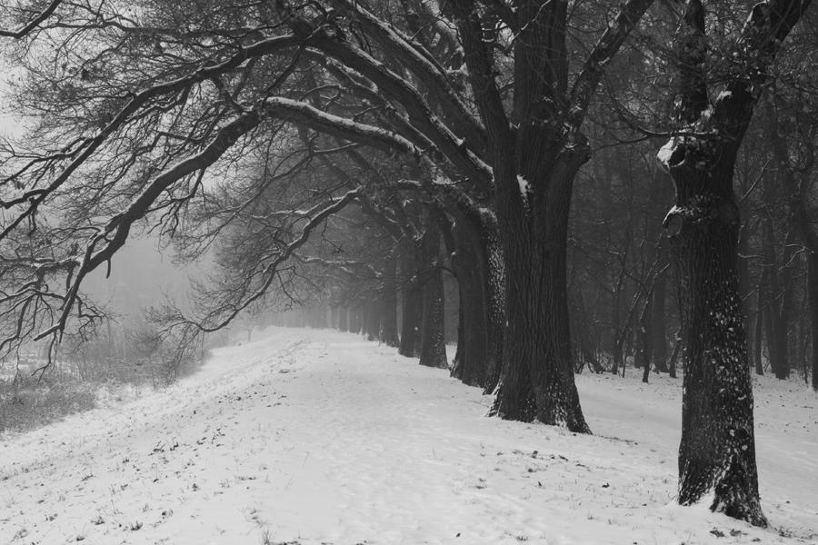 Wrocław / Snow
