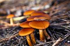 Mushrooms (minds-eye) Tags: mushrooms guana gtmnerr