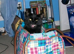-yawn- (BriSaEr) Tags: sabrina animal cat blackcat flash yawn mean carrier yelloweyes midyawn
