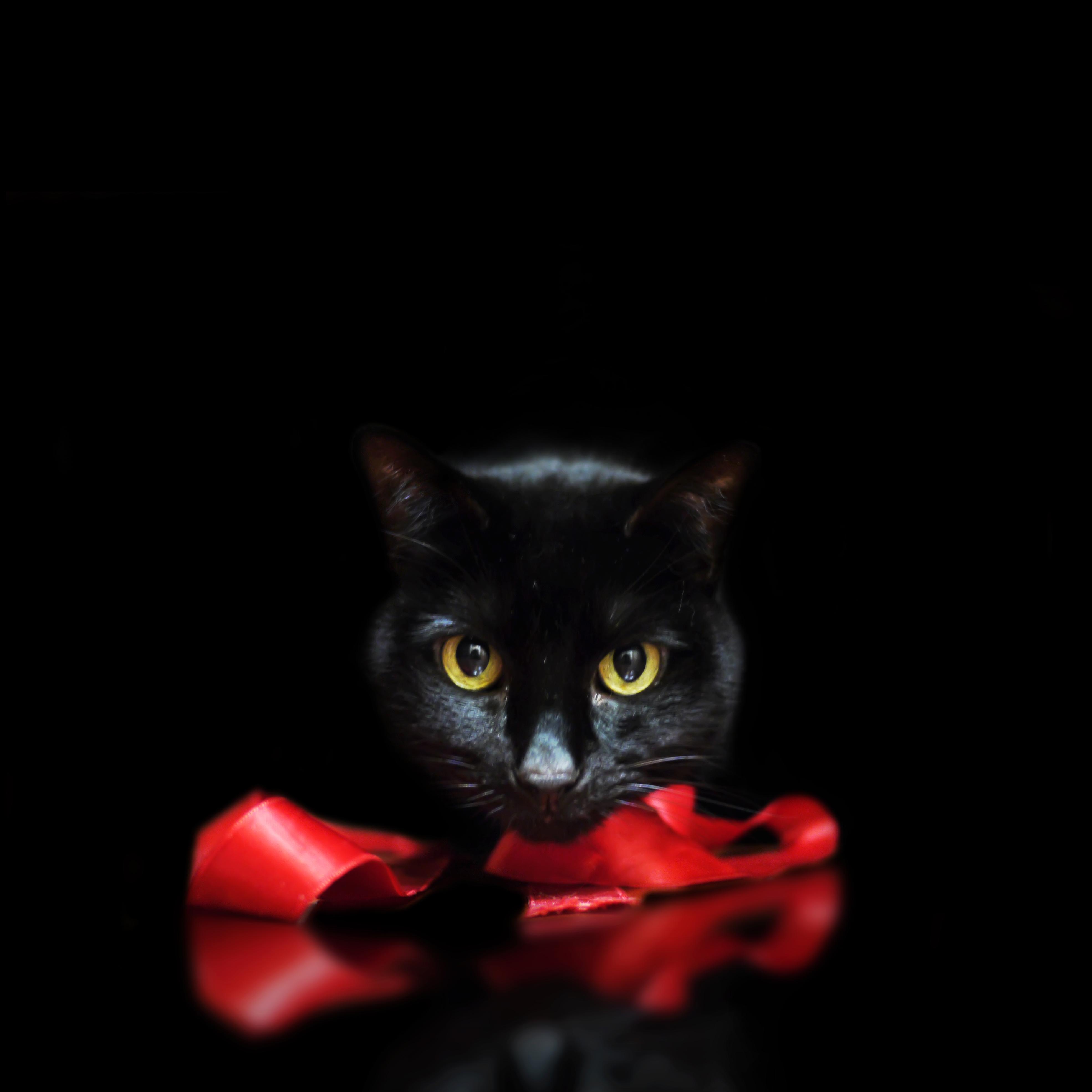 フリー画像 動物写真 哺乳類 ネコ科 猫 ネコ 黒猫 黒色 ブラック フリー素材 画像素材なら 無料 フリー写真素材のフリーフォト