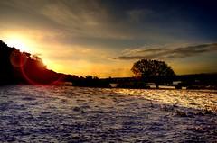 Sun rise (Tony Shertila) Tags: morning winter england snow tree weather sunrise golden europe day britain scenic fields wirral 1000views storeton platinumheartaward scenicsnotjustlandscapes