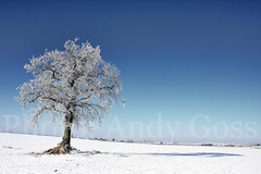 Arctic Ireland... (Andy_Goss) Tags: ireland winter irish tree lonetree irishlandscapes vanagram updatecollection ucreleased gettyimagesirelandq1
