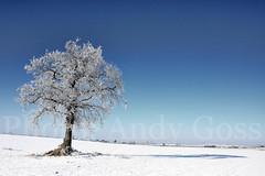 Arctic Ireland... (Andy_Goss) Tags: ireland winter irish tree lonetree irishlandscapes vanagram updatecollection ucreleased gettyimagesirelandq1