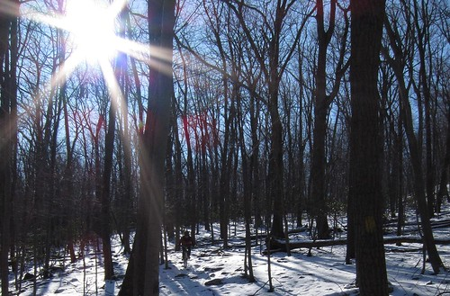 Sun and Snow in Gambrill State Park