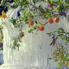Gainesville Citrus Ice Castle (gatorgalpics) Tags: orange castle ice frozen florida juice gainesville deep freeze fl citrus oranges icecastle gainesvillefl gainesvilledeepfreeze