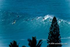 surfing a huge wave at Waimea Bay, on the north shor eof Oahu, Hawaii. (Sean Davey Photography) Tags: usa color horizontal hawaii oahu northshore waimeabay greenenergy seandavey oceanpower 011110 powerfulwaves surfnorthshore picturessurfers wavesenergy seawaveenergy oceanenergy surfbigwave bigwavesurfers biggestwaves waimeabaynorthshoreoahu jan10th2010