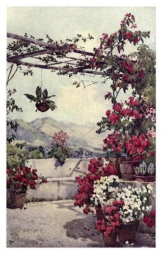 003-Azaleas en la Quinta Ilheos de Madeira-The flowers and gardens of Madeira - Du Cane Florence 1909