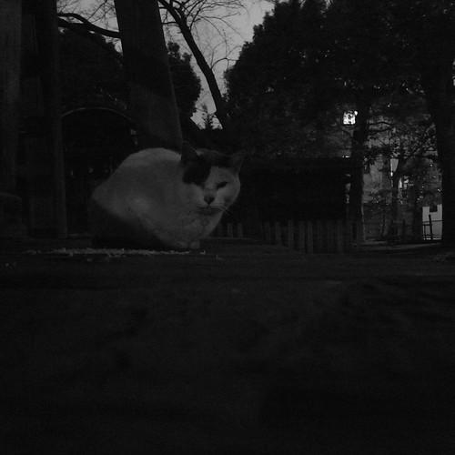Today's Cat@2010-01-21