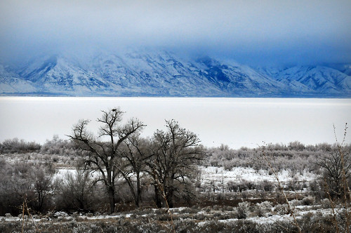 trees along shore of utah lake frozen blue mountain