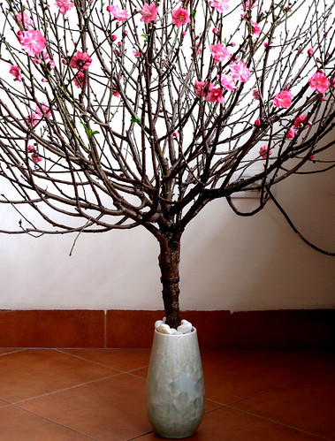 Traditional tet blossom tree