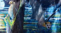 Ninox strenua - Powerful Owl  and Pteropus poliocephalus - Grey-headed Flying Fox (Treasures of the Tweed Mural Project) (Black Diamond Images) Tags: mural murals australia nsw commercialroad florafauna threatenedspecies greyheadedflyingfox murwillumbah powerfulowl pteropuspoliocephalus ninoxstrenua davidadams commercialrd educationalmural tweedcaldera treasuresofthetweedmuralproject treasuresofthetweedmural tottmp treasuresofthetweed tweedartgallery endangeredecologicalcommunities2008present