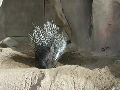Zoo of Denver  DSCN0035