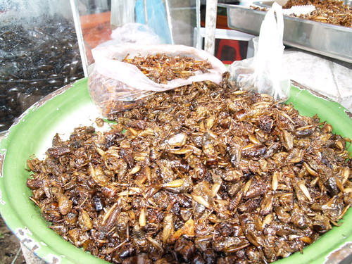 crickets in Cambodia