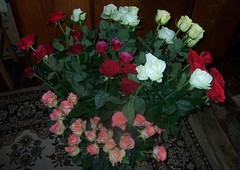 Mylimiausios gėles(Veidrodinis vaizdas) (domka1) Tags: gamta vaizdeliai albumas asmeninis