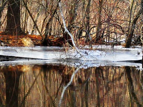 sudbury river february birch