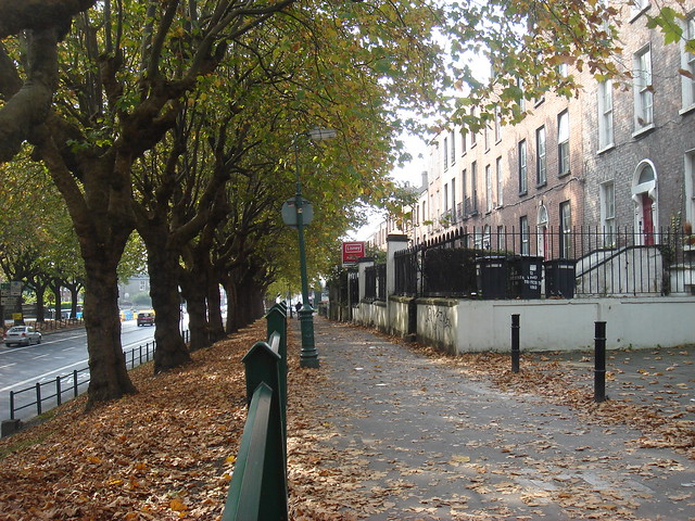 Drumcondra in autumn