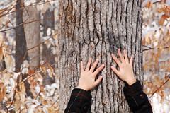 this shoot (kay rod) Tags: winter snow cold tree leaves yellow forest hands coat fingers bark