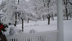 Feb 10.10 - Front Yard 5