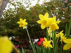 (giyoung) Tags: sanfrancisco spring yerbabuena