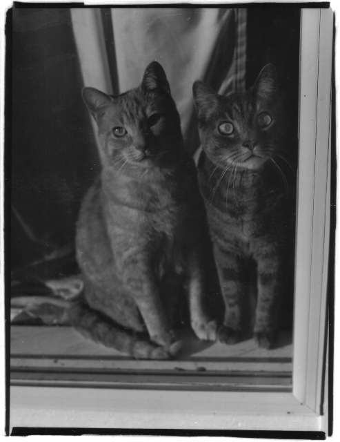 Two Cats in a window