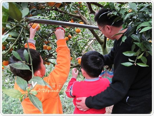 關西採草莓橘子牛欄河2010.02.20-38
