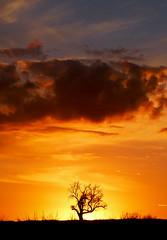 the greenhouse effect (ssj_george) Tags: leica blue sunset shadow sky orange cloud black tree nature silhouette landscape lumix fire airport natural air cyprus panasonic saltlake greenhouse 1001nights effect fiery divide larnaca dividing φαινόμενο superaplus aplusphoto photographyblog κύπροσ georgestavrinos λάρνακα fz38 fz35 ssjgeorge γιώργοσσταυρινόσ θερμοκηπίου sonyphotochallenge