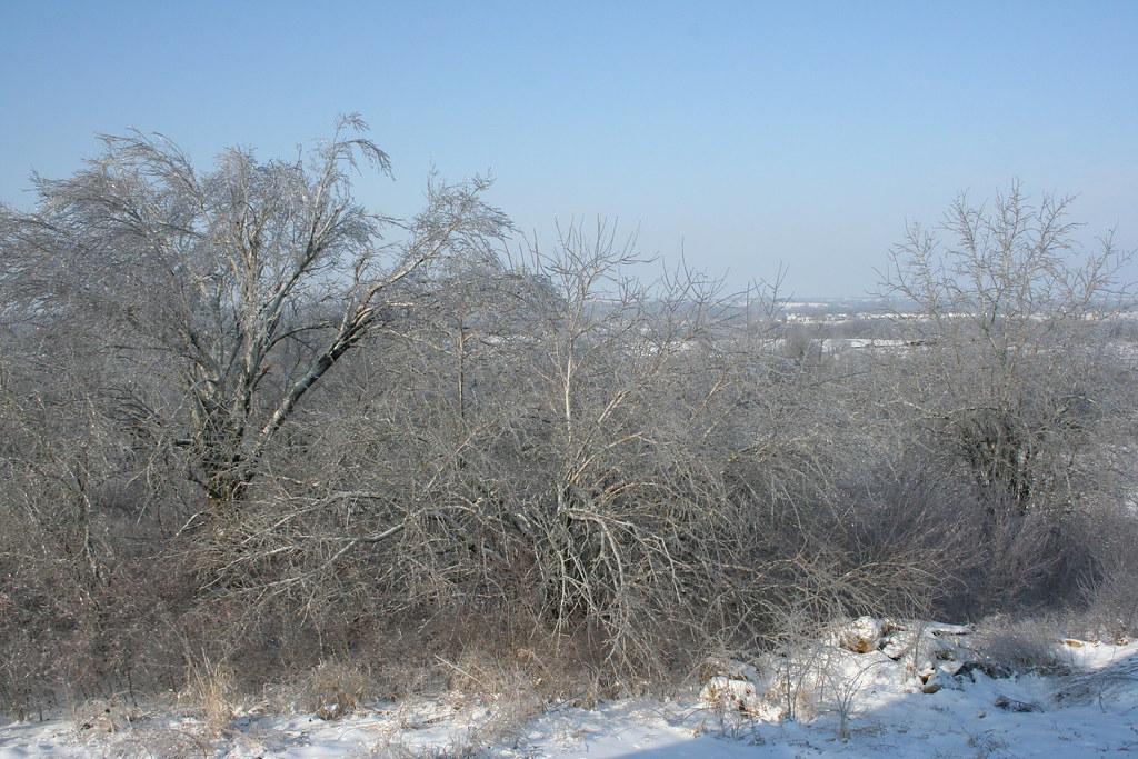 Icy osage oranges
