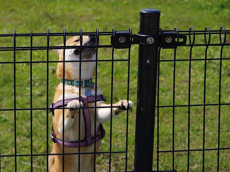 狗公園一小時遊
