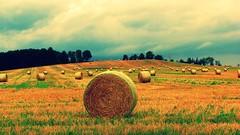 toronto ontario canada game grass dead farm straw hay caledon adjala