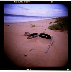 Drift Wood. (norbography) Tags: wood 6x6 film beach mediumformat landscape holga sand purple transparencies kodake200 flickrshop bedroomphoto 2009toddnorbury onzfave