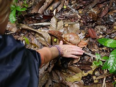 Size of my hand (Jimmy_Campbell) Tags: rainforest jungle rurrenabaque amazonbasin