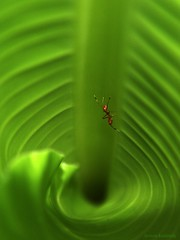 Climb Every mountain.... (aroon_kalandy) Tags: light india green nature beauty creativity leaf artistic sony awesome ant kerala greatshot cropped impressions lovely naturelovers calicut sigma18200 beautifulshot anawesomeshot sonydslra200 malayalikkoottam aroonkalandy theoriginalgoldseal