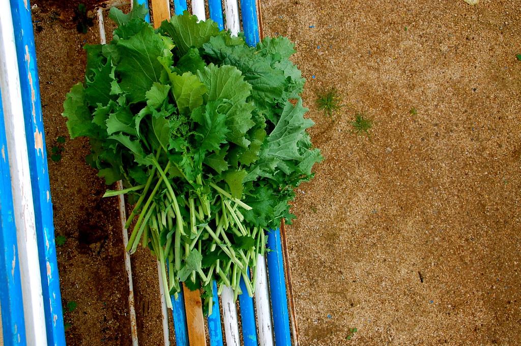 some harvest broccoli rabe