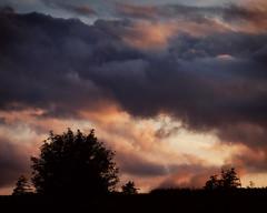 Clouds Of Colour (Clyde Barrett (0ffline)) Tags: sunset sky tree clouds newfoundland nl nfld clydebarrett