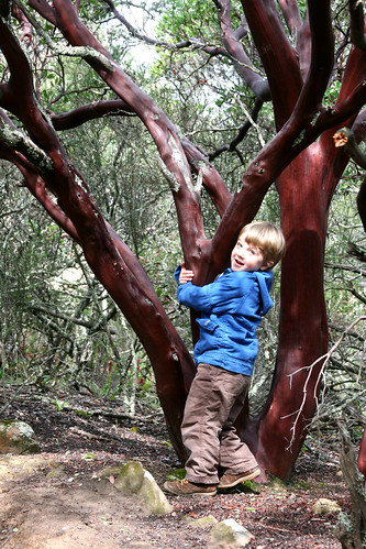have you hugged your manzanita today?