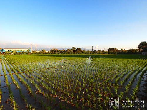 Olympus_EP2_Chiayi_snap_21 (by euyoung)