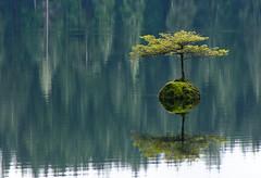 20100313D300_5054 (cisco42) Tags: lake canada reflection nature forest landscape britishcolumbia vancouverisland northamerica fairylake portrenfrew freshwater