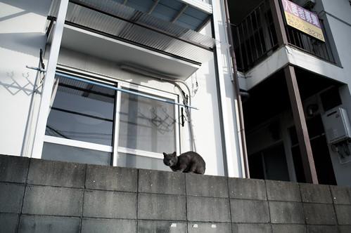 JC0317.033 福岡市東区 K7+21_3.2 AL#