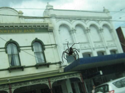 78 - Spider