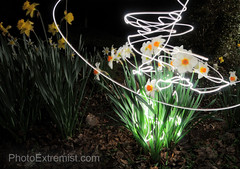 Garden Flowers Light Painting Long Exposure (Photo Extremist) Tags: flowers light beautiful garden painting photography photo long exposure pretty bright magic trails maglight vlue photoextremist
