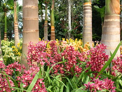 Orchid show 2010