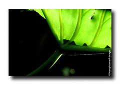 Untitled-60 (HoangHuyManh images) Tags: flowers leaves landscape streetscene flickrgoldaward colorphotoaward flickrsilveraward flickrbronzaward hoanghuymanhimages chariotsofnaturelevel3 chariotsofnaturelevel1 chariotsofnaturelevel2 chariotsofnaturelevel4