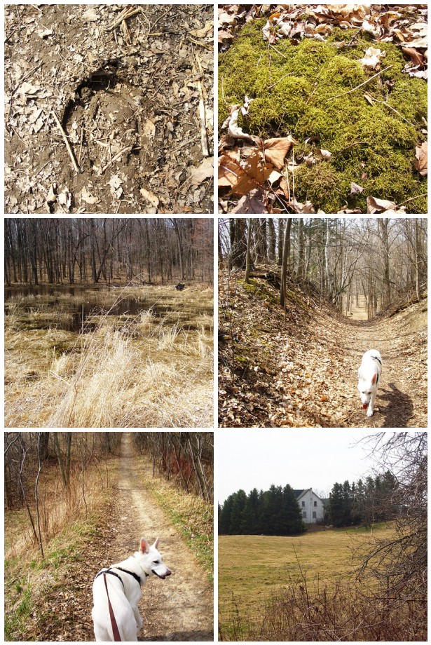 April 3-out walking part of Oak Ridges trail