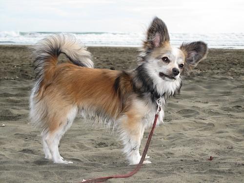 Alfie at Bethells Beach