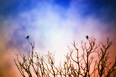 Love (Theophilos) Tags: sky nature colors birds clouds greece crete rethymno brances